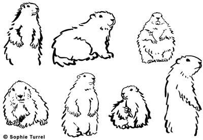 Création du logo pour le restaurant Le chalet des marmottes
